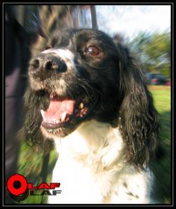 Olaf(2)---Explo---2003