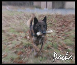 Pacha-STUP(6)-2007