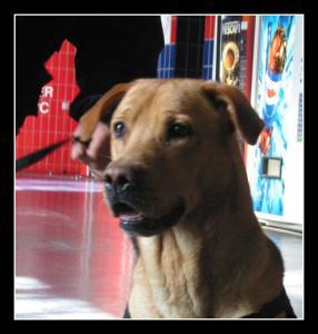 Rocco---STUP---2005