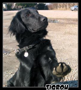 Tigrou(3)---Explo---2007