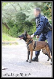 Airton(1)---Patrouille---28.05.2011---