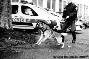 Azzo(01)---(DetectInter)---21.12.2011