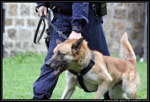Azzo(04)---(DetectInter)---01.08.2012
