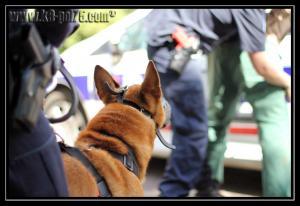 Cid(11)---Patrouille---28.05.2011---