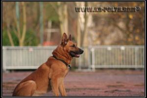 Cid(3)---Patrouille---2010---