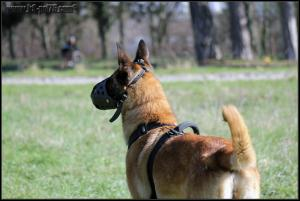 Feline1-DetectInter-22.03.2012