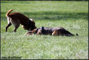 Feline et Punch1-DetectInter-22.03.2012