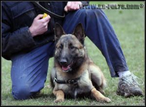 Hatch(2)---Patrouille---2010---